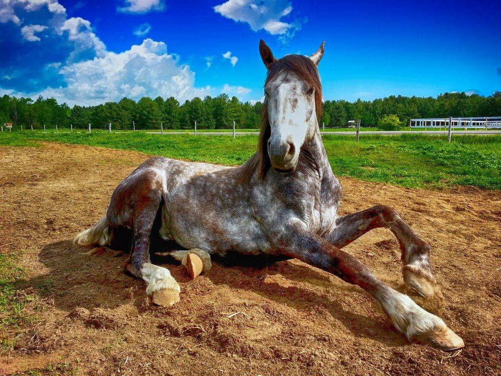 Akupunktur fuer Pferde Seminar